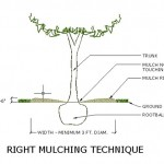 Right Mulching Technique