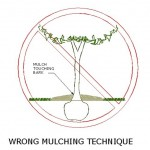 Wrong Mulching Technique