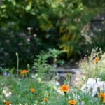September St. Louis Garden