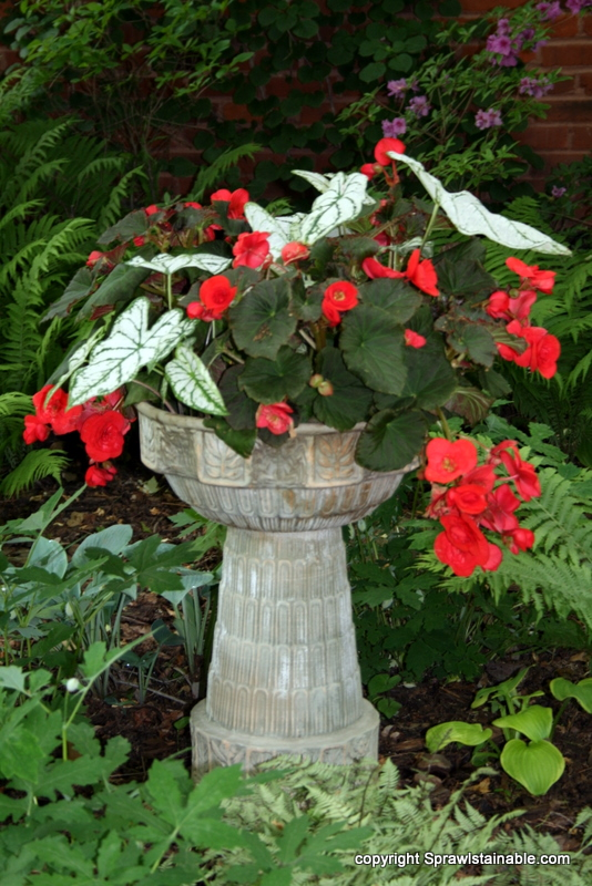Adding color to the shade garden this planter of orange begonia and white caladium really creates a focal point