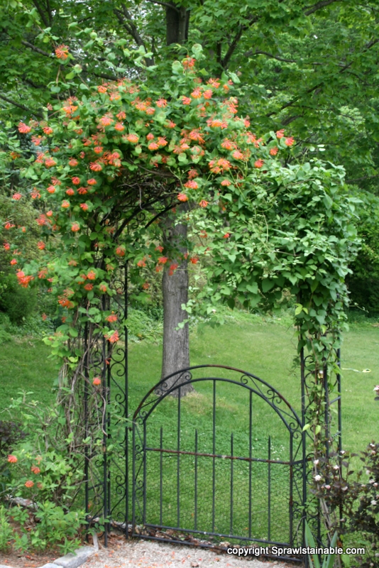 wrought iron garden arbor trellis