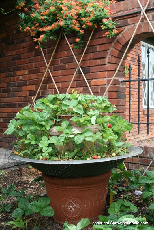 Strawberry planter which is actually a planter, with a copper firepit on top, and then another planter