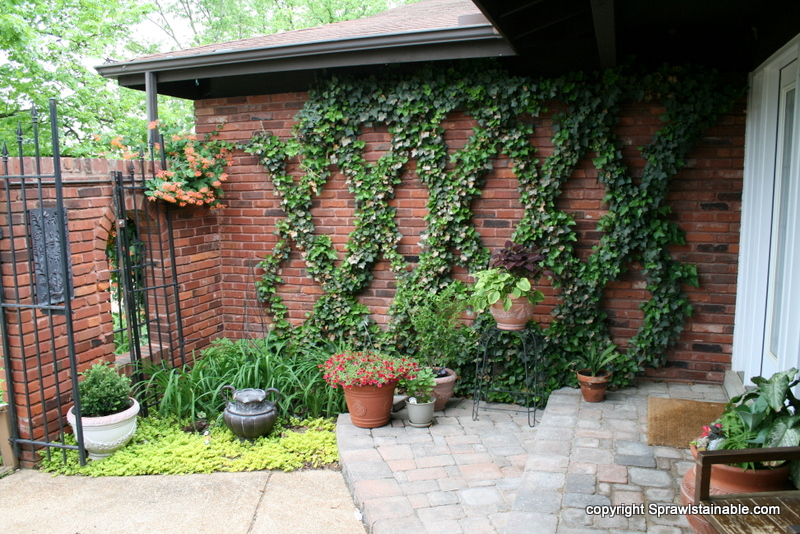front entry courtyard landscaping with trellised ivy, edible planters, creeping jenny and new pavers