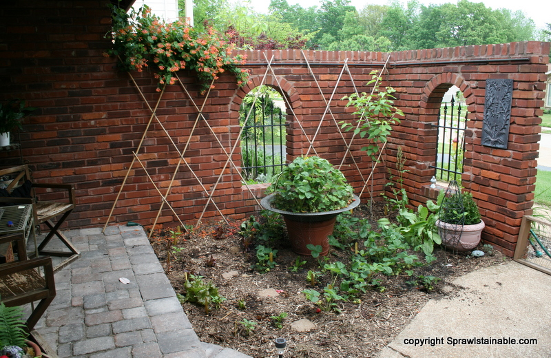Edible landscaping in the courtyard with tomato trellis, strawberries, a new cherry tree and peppers