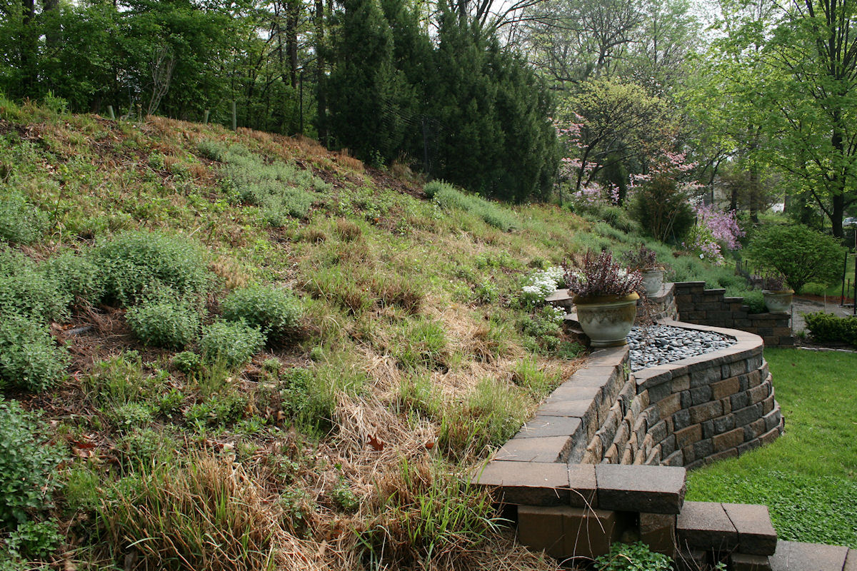Hill Garden early April 2011