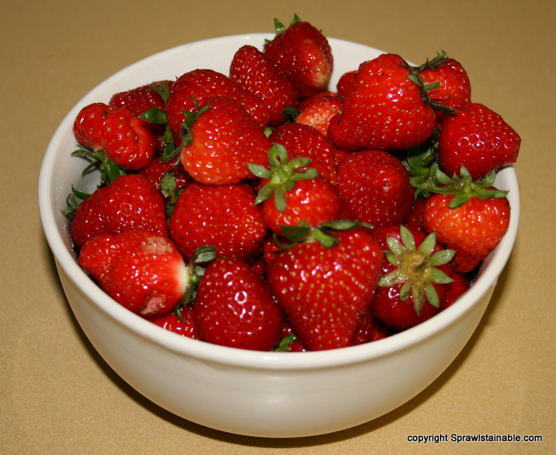 A bowl of some of the fresh homegrown strawberries
