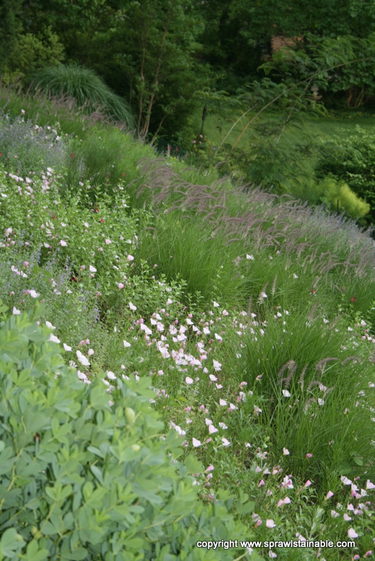 Colorful Wildflower Hillside in June with Baptesia, Primrose and grasses