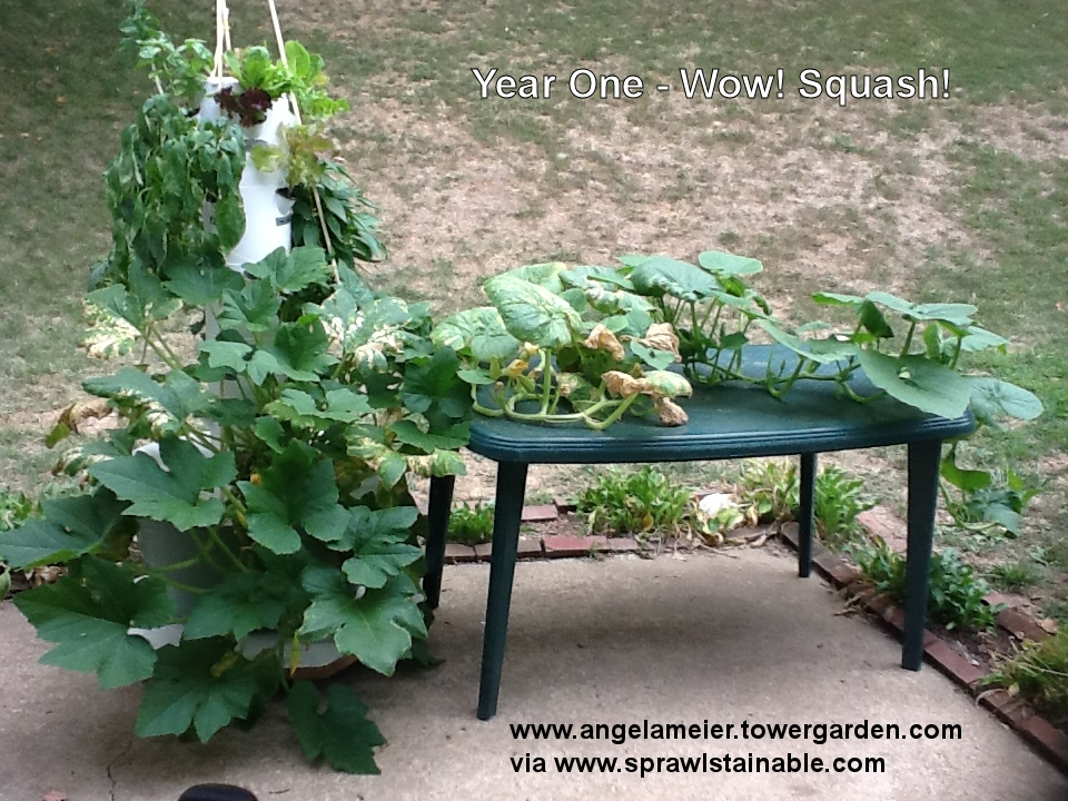 Growing Zucchini Squash Vines in Hydroponic Tower Garden