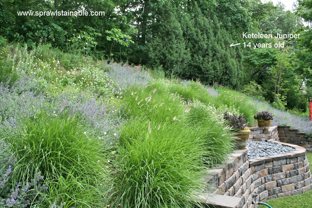 Backyard Hill Landscaping Ideas Sprawlstainable - Backyard hill landscaping ideas